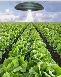UFO harvesting lettuce from a field in Northampton